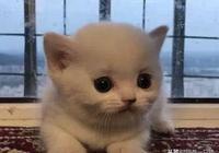 小奶貓的樣子實在是太可愛了,連生氣都是這麼的沒有殺傷力呀!