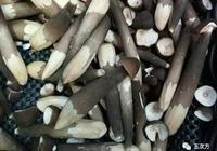 菜市場上的假雞樅、假松茸和假口蘑