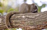 世界上10種最懶的動物,樹懶居然不是第一!|