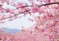 送別三月,迎來四月,你是人間的四月天!