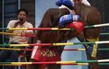 泰國猩猩拳王爭霸賽,中場休息時母猩猩還去吻公猩猩,為它加油