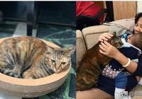 奶奶被新來的霸佔,虎斑貓爭寵眼神死:那是我的位子
