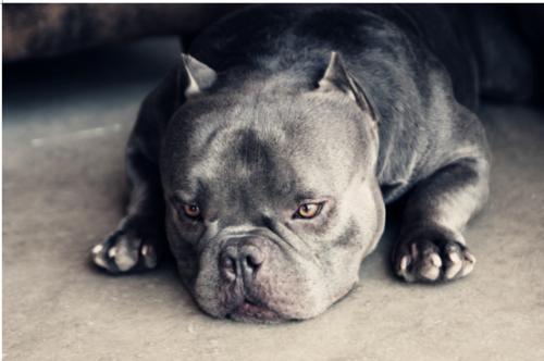 這種狗狗你絕對不會想要去養,因為養會被別人嫌棄,自己都嫌棄!