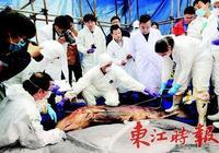 抹香鯨母子 永遠留在惠州