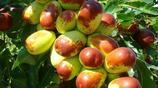 如果家裡有空地,栽上這幾種果樹,當年結果,隨吃隨摘果香滿園