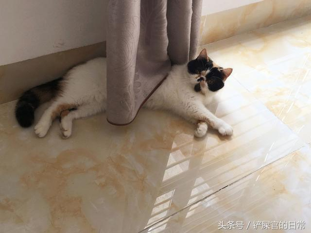 一隻睡覺時把自己臉部壓扁的加菲貓