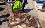 秋季釣鯽魚鯉魚絕招!高手分享1招釣魚餌料配方技巧!魚獲67斤!