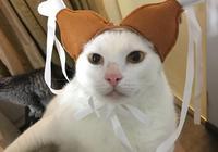 主人不知道自己帶著孕婦貓回國,到家之後貓咪突然生了嚇壞主人