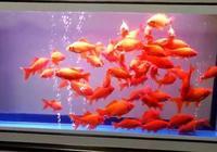 魚缸的水質管理就是哪裡髒了洗哪裡,這句話對嗎?