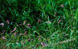 銅川:鳥的天堂
