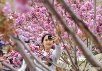 太原的櫻花
