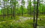 小眾景點有大美:莫爾道嘎國家森林公園