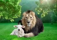 世界是獅子的,獅子是白羊的