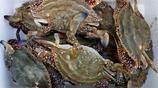 梭子蟹價中秋節前一天達到高峰 攤販說明天多少錢可能也買不到了