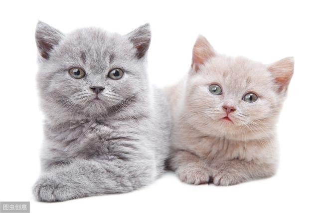 新手鏟屎官如何挑選貓咪?通過這三步,身體健康的貓咪屬於你
