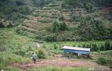 80後男子放棄十幾萬年薪,回老家當農場主,打造自己的食物森林