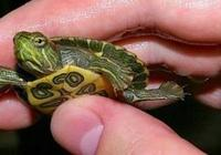 烏龜有靈性?