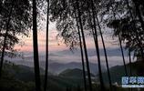 大別山的竹海與雲海