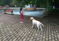 我家的拉布拉多五個月了,得了犬瘟,已經治了一週左右了,還是沒有好一點該怎麼辦?