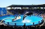 風景圖集:邁阿密水族館