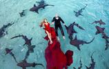 這對新人不得了,為拍婚紗照和鯊魚游泳,還和豬游泳