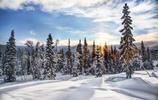 風景圖集:雲杉樹木風景高清圖