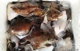 趕海野生大鮑魚160元一斤 新上市大赤眼魚10元一斤 顧客買的歡
