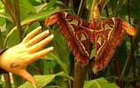 世界五大昆蟲排名榜,第一名比老鼠還重它能用爪子掰斷一根鉛筆