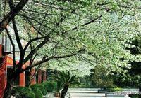 千樹萬樹梨花開·最是人間三月天