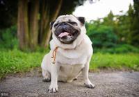 幽默笑話:我家有條狗,爸媽不想要了,我想把它送給你!