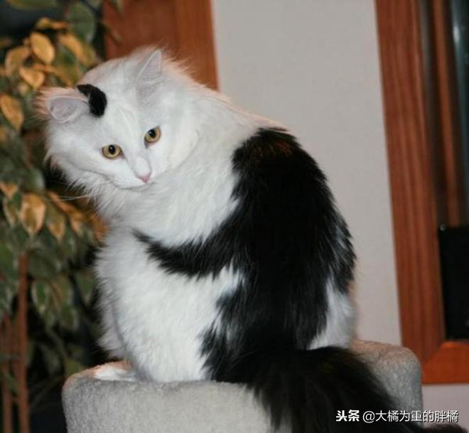 知道這11只貓是怎麼出名的嗎?看了圖之後你就知道了,斑紋真別緻