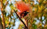 充滿野蠻氣息的攝影勝地——巴布亞新幾內亞