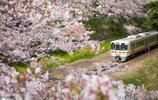 櫻花盛開的季節,去日本看櫻花電車