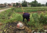 鄂東黃岡:實拍農村老人勞作的8個場景,活到老幹到老,任勞任怨
