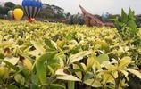 這是深圳最適合親子游玩的景區,你去了嗎