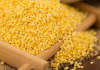 常吃小米營養好,但這2種人不能吃,當心導致病情加重!