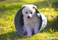 狗知道自己是狗嗎?