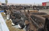 沒有啥是驢肉火燒解決不了的,看農村姑娘的表情就知道有多好吃了