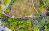 航拍濟南泉城公園,奼紫嫣紅、綠意盎然,迎來最美春天