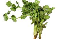 洛陽土話裡的蔬菜:芫荽