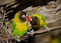 愛情測試:你覺得哪對鳥會給你帶來好運,要不要努力去改變一下?