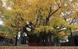 實拍中國最古老的10顆大樹,最後一棵見證了華夏之路