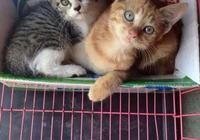 下車發現貓叫聲越來越明顯,然後在底盤上發現了一隻小橘貓!