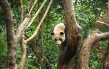 大熊貓的日常