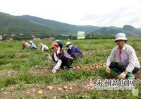 雙牌縣馬鈴薯種植喜獲豐收