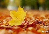 秋風、秋雨,愁煞人