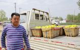 山東農村大哥賣天價西瓜,1公斤36元,一年賣出180萬