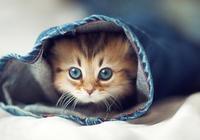 貓驅蟲多久一次?寵物醫生對貓驅蟲藥的使用建議