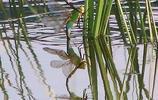 小昆蟲,大世界