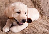 小狗到家的第一天,要讓狗狗喜歡主人和新家,你準備好這些了嗎?